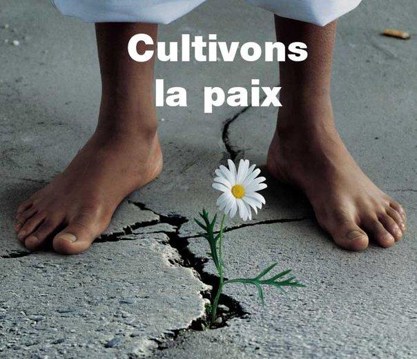Cultivons la paix, cultivons nos graines intérieures